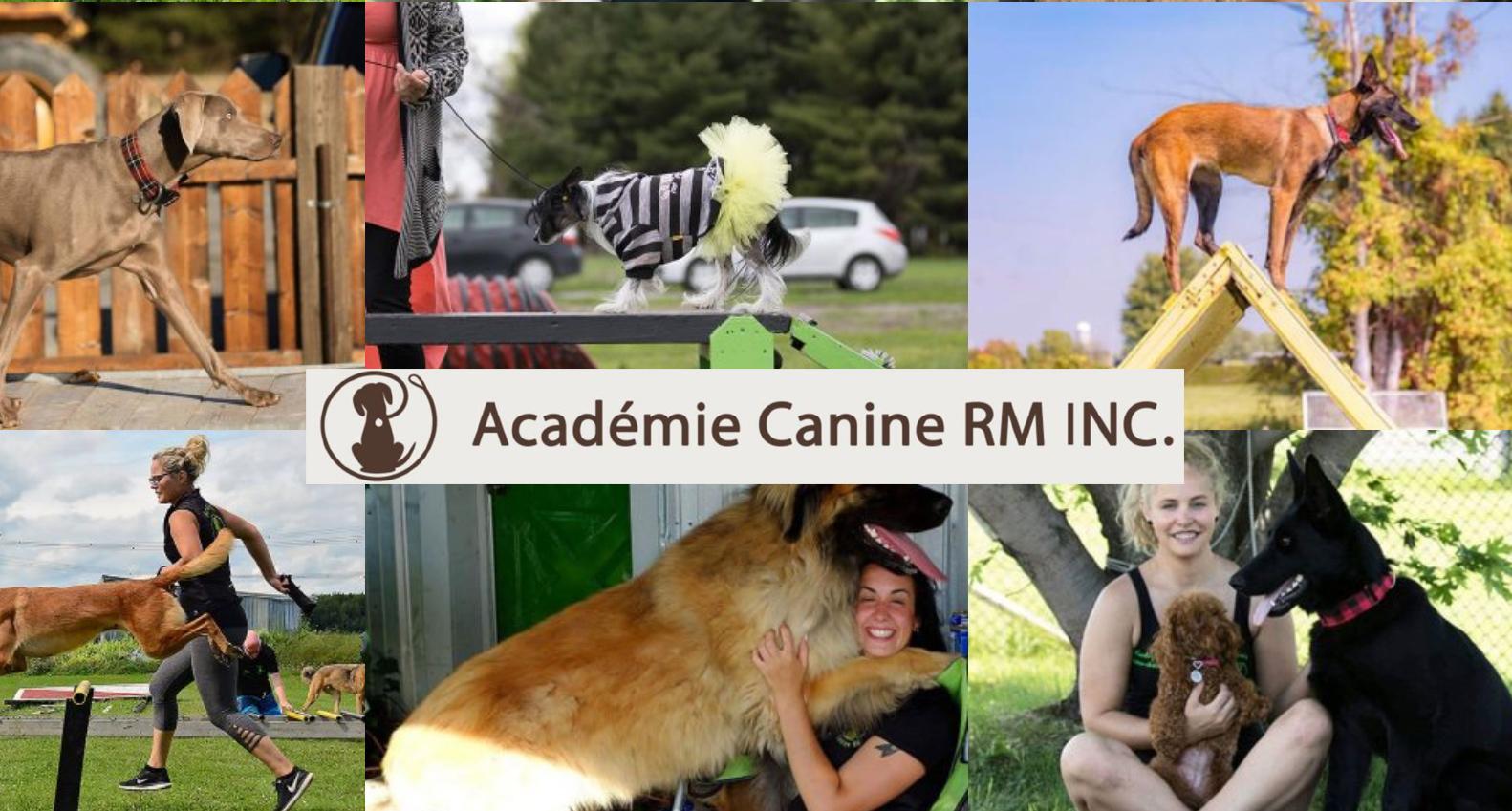 Académie canine RM education canine, garderie