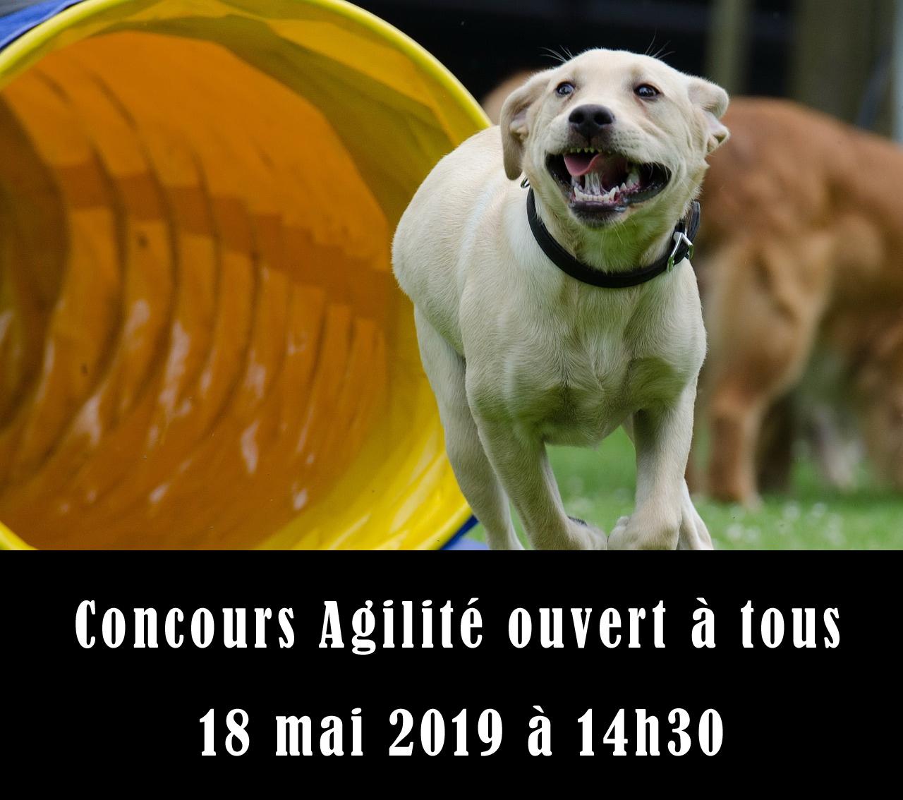 Concours d'agilité chez Animal Expert St-Bruno
