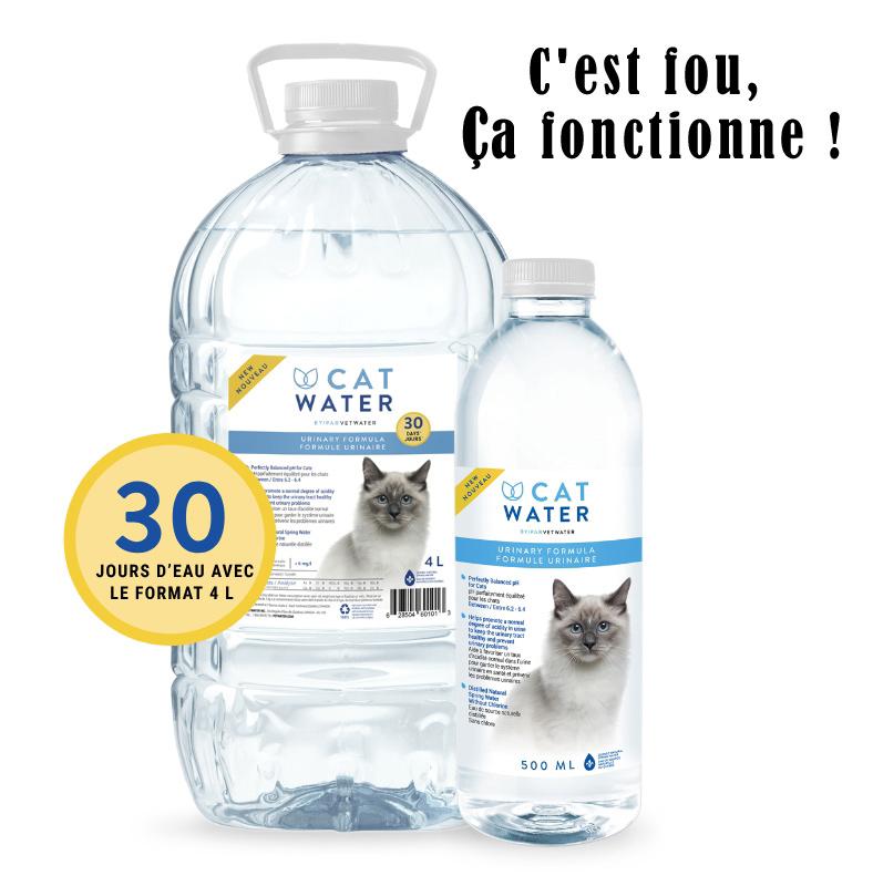 rabais cat water