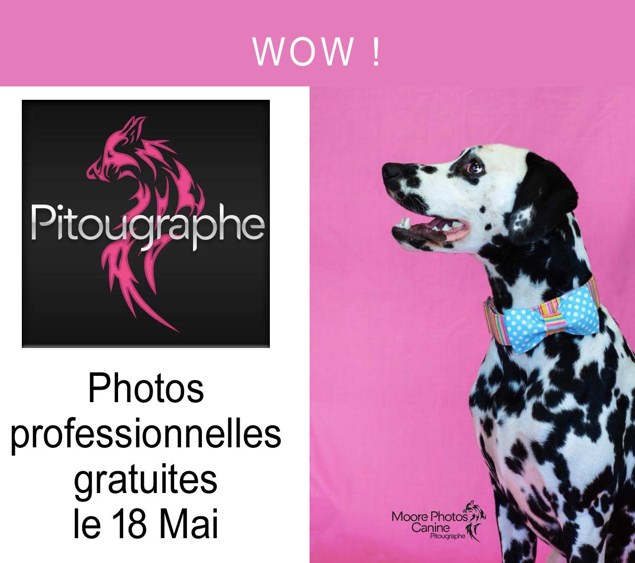 Photos animaux gratuite avec la pitougraphe