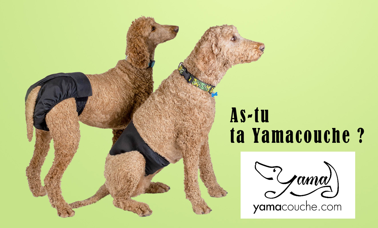 Yamacouche couche et beandeau pour chat et chien